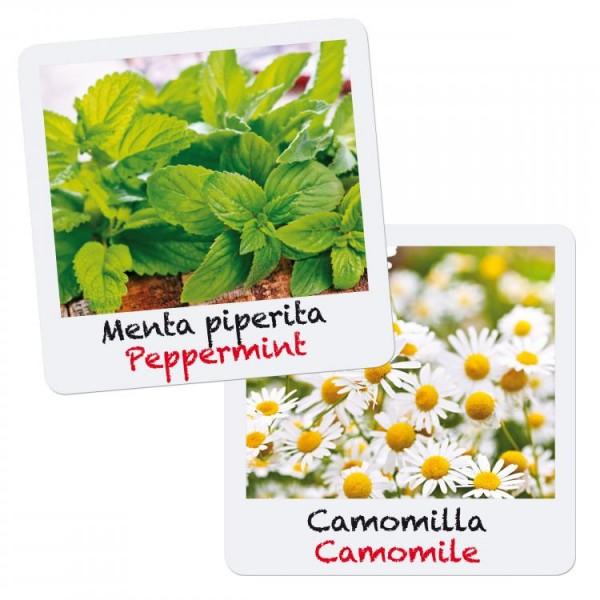 Set creativ pentru copii Gioca Green plantare si crestere Menta si Musetel Quercetti imagine