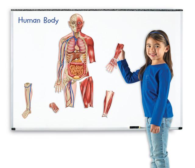 Corpul Uman - Set Magnetic imagine