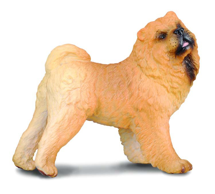 Chow Chow - Collecta
