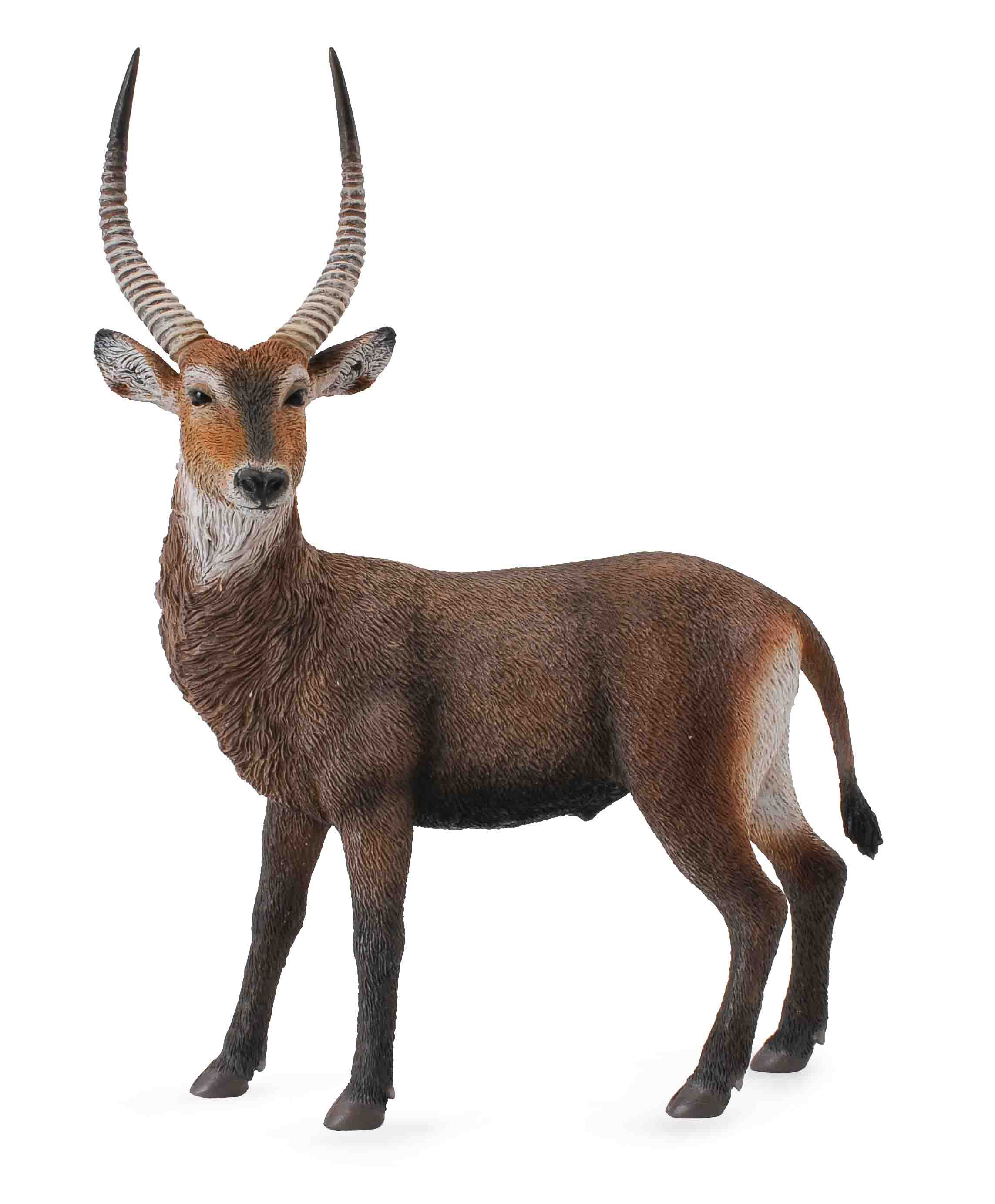 Antilopa africana- Collecta