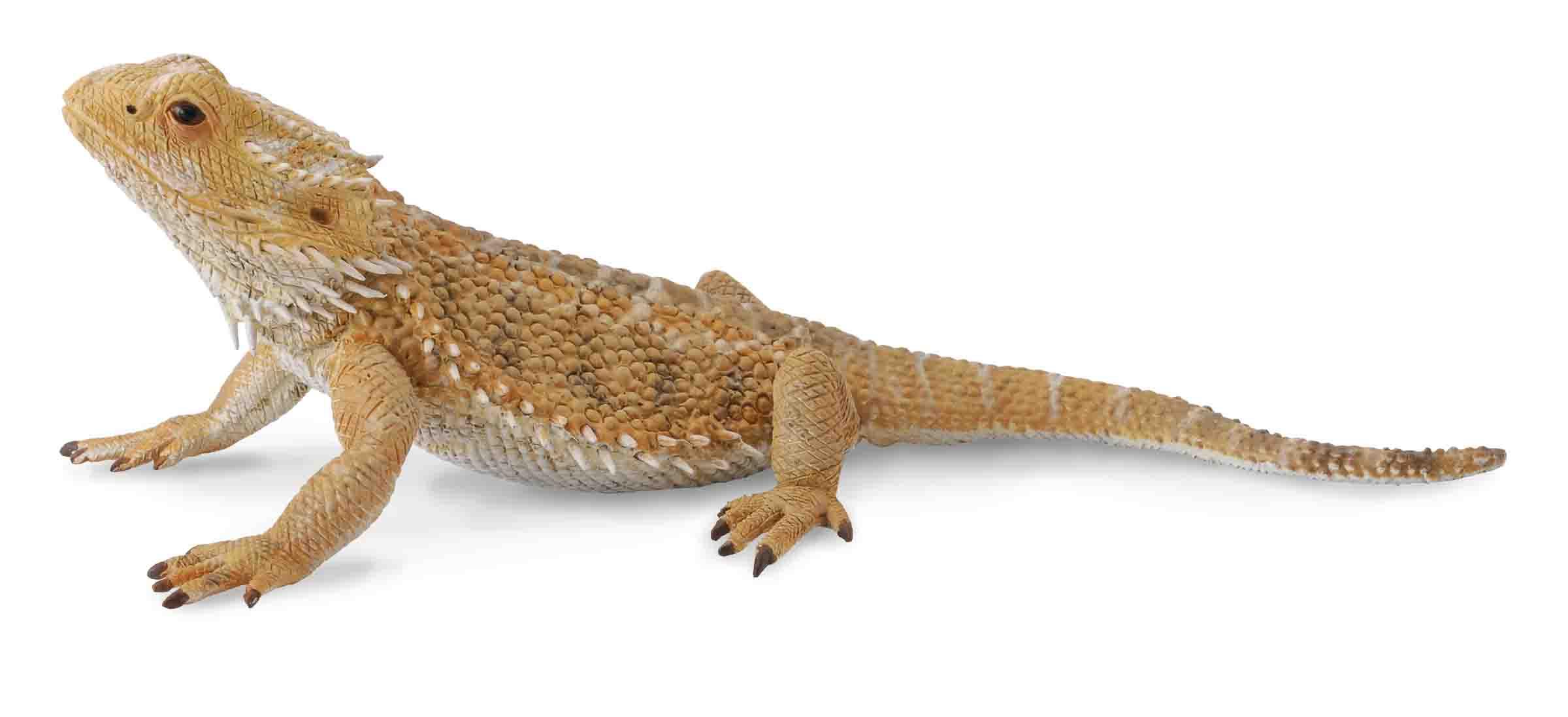 Figurina Soparla Dragon cu barba L Collecta