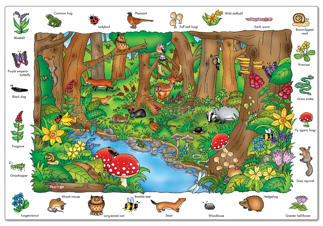 Puzzle In Limba Engleza In Padure (150 Piese) Where In The Woods?